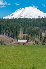 Pasture with dandelions, red barn, Mt. Adams (Washington State Department of Agriculture) Tags: april klickitatcounty mountadams mountain wsdagov washingtonstatedepartmentofagriculture barn pasture spring washington washingtonstate