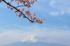 富士に桜 (* Yumi *) Tags: 桜 富士山 河口湖 sakura mtfuji