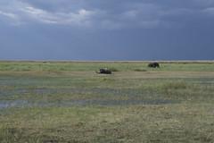 DSC_2626_1 (Marshen) Tags: botswana capebuffalo cattleegret elephant