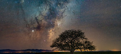 Tree Pano test (gaabNZ) Tags: panoramic mikyway tree galaxy galactictree stars colour sky nightsky sony sonya7mkiii sony85mmf18 astrophotograpy astro