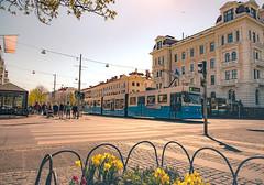 Gothenburg Avenyn (Fredrik Lindedal) Tags: gothenburg göteborg avenyn sweden sverige tram people leafs flowers streetview street sunlight city cityscape cityview lindedal gbg thisisgbg