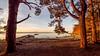 Morning mood in Uutela I, East-Helsinki 🌴🌴 (Esa Suomaa) Tags: helsinki scandinavia suomi suomenlahti finland trees tree trail beach planetearth olympusomd morning earlymorning sea sunrise
