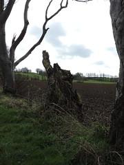 hedgepiece (Shannon O'Haire) Tags: got gameofthrones ireland northofireland northernireland kingslanding kingsroad bregaghroad trees darkhedges nature tvshows gothsintrees