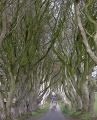 Hedgeblur (Shannon O'Haire) Tags: got gameofthrones ireland northofireland northernireland kingslanding kingsroad bregaghroad trees darkhedges nature tvshows gothsintrees