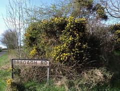 Bregagh (Shannon O'Haire) Tags: got gameofthrones ireland northofireland northernireland kingslanding kingsroad bregaghroad trees darkhedges nature tvshows gothsintrees