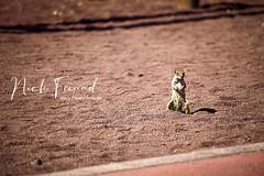 jandia freund foto fuerteventura (menturia) Tags: jandia spanien urlaub fuerteventura reise strand meer erholung nick freund fotograf landschaft fotografie foto landschaftsfotografie