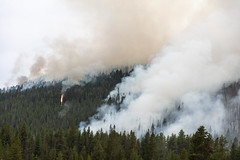 Forest Fire (Duncan Rawlinson - Duncan.co) Tags: 1n4j8udzj9bqtxu7ubcmvosvy8ufhdgk1f 5dsr canon canoneos5dsr duncanrawlinson duncanrawlinsonphoto duncanrawlinsonphotography duncanco forestfire landscape man nationalpark photobyduncanrawlinson shotwithcanoneos5dsr summer summertrip2018 unitedstatesofamerica wild wyoming yellowstone yellowstonenationalpark yellowstonenationalparkwyomingunitedstatesofamerica background burn change climate climatechange co2 damage danger dead deforestation destruction disaster dry ecology emergency emissions environment experiment fire flame forest globalwarming ground hazard heat hot httpsduncanco ignite natural nature outdoor outdoors pine pollution problem red smoke smoky tree trees trunk warming wildfire wood woods yellow gallatingateway montana unitedstates