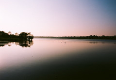 summer nights (Andrew.King) Tags: summer water reservoir pitsford sunset bright tint cloudless clear sky blue trees reflection ripples swans birds film nikon f3hp f3 kodak ektar 100 landscape silhouette shadows contrast evening