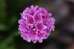 Little Flower (Hugo von Schreck) Tags: hugovonschreck flower blume blüte macro makro canoneosm50 tamronsp90mmf28divcusdmacro11f017 greatphotographers