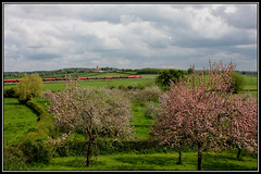 APPLE BLOSSOM TIME (OLD GIT WITH A CAMERA) Tags: