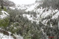 IMG_2014 (ChPflügl) Tags: mai may spring frühling italien italy europe europa chpfluegl chpflügl christian pflügl pfluegl vajont schnee snow winter is back