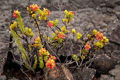 Mauna Ulu, Kilauea, Hawaii Volcanoes National Park, Hawaii (Roger Gerbig) Tags: maunaulu hawaiivolcanoesnationalpark kilauea volcano hawaii bigisland island rogergerbig canoneos5dmarkii canonef24105mmf4lisusm 3343 volcaniccone easternriftzone