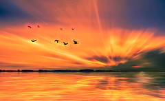 Solitude 668 (Wim Koopman) Tags: fire explosion sunset sunrise water reflection effects mood atmosphere horizon birds geese goose flying flight intense