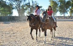 Na Campereada (Eduardo Amorim) Tags: gaúcha gaúchas gaucha gauchas mulher mujer woman femme donna pampa campanha fronteira jaguarão riograndedosul brésil brasil sudamérica südamerika suramérica américadosul southamerica amériquedusud americameridionale américadelsur americadelsud brazil eduardoamorim cavalos caballos horses chevaux cavalli pferde caballo horse cheval cavallo pferd crioulo criollo crioulos criollos cavalocrioulo cavaloscrioulos caballocriollo caballoscriollos