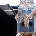 Astronauts Grunsfeld and Feustel during EVA1