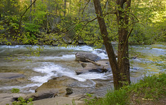 Toccoa River (mevans4272) Tags: toccoa river rocks trees woods grass springtime