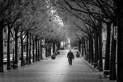 Manacor, Mallorca (Adrià Páez) Tags: manacor mallorca majorca spain españa europe islas baleares balearic islands illes balears black white bw trees man walking city canon eos 7d mark ii llevant