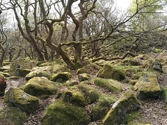 Hathersage Circular via Stanage Edge Higger Tor and Padley Gorge walk 319 (anon_e) Tags: ancientwoodland padleygorge