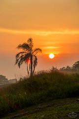 IMG_S2-7425 (Max Hendel) Tags: sunrise nascerdosol sun sol amanhecer morning amanhecendo bymaxhendel bymaxhendelphotography pormaxhendel maxhendelphotography maxhendelphotostream rodoviasp225pirassunungaspbrasil beautifulsunrise highwaysp225pirassunungaspbrazil sky