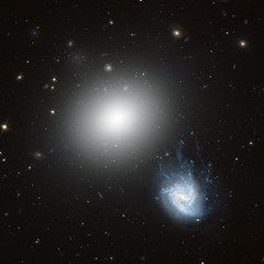 NGC 4850 & NGC 4858 (LaydeeDem) Tags: galaxy space hubble nasa esa stsci coma myhubblepictures