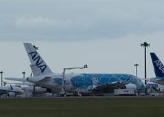 JA381A 地上整備 (edo420) Tags: d5 500mmf56 ja381a airbus エアバス a380 airplane 飛行機 成田 narita 千葉 chiba pflens pfレンズ japan