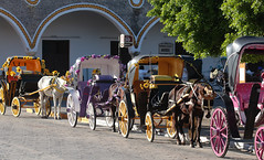 Izamal Carriages (peterkelly) Tags: digital canon 6d northamerica gadventures mayandiscovery mexico yucatán izamal street road horses horse carriage arch plaza square