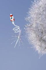 Launch Pad (Hugobian) Tags: little faerie fairy kingdom macro dandelion seed heads sun droplets fantasy pentax k1
