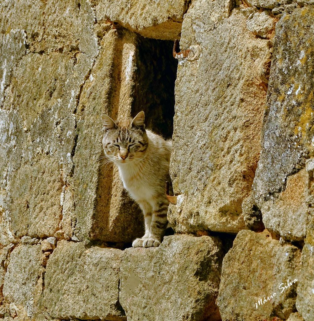 """Águas Frias (Chaves) - ... o gato à """"janela"""" ..."""