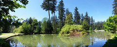 Upper pond, Central park, 2019 (D70) Tags: upperpond centralpark 2019 burnaby britishcolumbia canada douglasfir panorama stitched island
