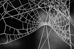 Frosted web (Hidden in the flash.) Tags: spider web frost frosty blackandwhite bw mono monochrome nikon d3400