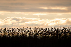 Morning Glow (Neil Cornwall) Tags: 2019 april canada ontario pointpelee boardwalk clouds marsh spring sunrise water
