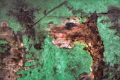 The wall is living I (Eva Haertel) Tags: eva haertel canon5dmarkiii stadt city wall wand mauer farbe color anstrich coating painting alt old absplitern splinteroff rost rust flecken stains grün green illusion fantasie fantasy tier animal