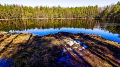 Last snow spots, Sipoonkorpi National Park, East-Helsinki ☃️🌴 (Esa Suomaa) Tags: suomi finland sipoonkorpi nationalpark trees tree trail pond spring water swamp olympusomd