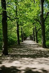 Luisenpark Erfurt (Sascha Klauer) Tags: allee baumallee bäume erfurt frühlig früjahr luisenpark park parkallee schatten sonnig spaziergang spring sunny thüringen thuringia