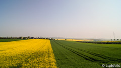 2 Couleurs (Lцdо\/іс) Tags: germany champs fields yellow green color colorful landscape deutschland deutsch countryside travel trip spring europe europa voyage road discover rhénaniepalatinat trekking treking blue sky mai may 2019 lцdоіс