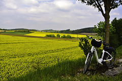 Cycling between yellow fields (Kat-i) Tags: rapsfelder rape fields geld yellow natur nature outside himmel sky fahrrad bicycle bäume trees frühling spring nikon1v1 kati katharina 2019