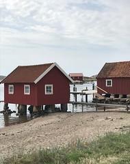 Waiting for summer (annarkias) Tags: bosthouse boathouses sjöbodar outside bohuslän västkusten sweden nature sea bohuscoast seaside