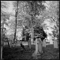 St Lawrence Churchyard Wide (jhotopf) Tags: blackwhite fp4 ilford blancoynegro noiretblanc hasselblad 503cx 50mmf4distagonc mediumformat 120
