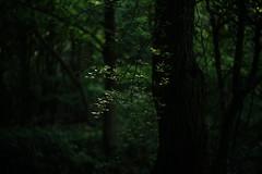 @walking path 41 (Amselchen) Tags: plants bokeh blur dof depthoffield season early summer sony zeiss carlzeiss sonnart1855 sonnar5518za sonyilce7rm2 fe55mmf18za