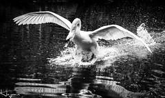 IMG_3495-Edit-1 (Wayne Cappleman (Haywain Photography)) Tags: wayne cappleman haywain photography portrait photographer farnborough hampshire