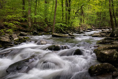 Solitude in the Forest (James Duckworth) Tags: cascades greatsmokymountainsnationalpark jamesduckworthphotography appalachians fineartphotography forest moss rapids river rocks trees water