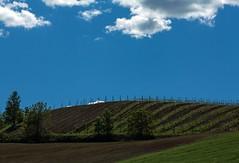 Semplicità (Dellatanus) Tags: italy landscape minimal abstract saaldigital sky vineyard wine nature polarizer oltrepopavese oltrepòpavese clouds blue