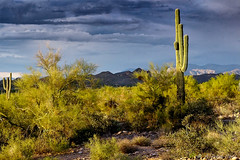 The Coming Storm (Alfredo Rafael) Tags: desert cactus southwest arizona clouds mountains landscape stormy