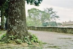 Il suono della Primavera (michele.palombi) Tags: spring analogic 35mm negativo colore natura strada