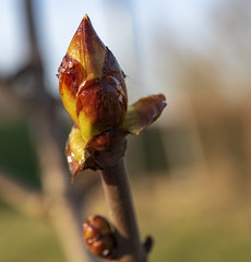 Spring / Весна (dmilokt) Tags: природа nature пейзаж landscape гора dmilokt весна spring ins