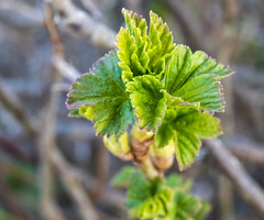 Spring / Весна (dmilokt) Tags: природа nature пейзаж landscape гора dmilokt весна spring