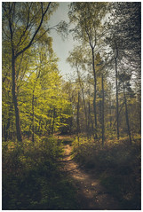 Follow this path, to where, nobody knows. (Ian Emerson (Thanks for all the comments and faves) Tags: woodland derbyshire peakdistrict canon6d canoneos light path haze flickr brokenapp smugmug photography outdoor trees green foliage england unitedkingdom