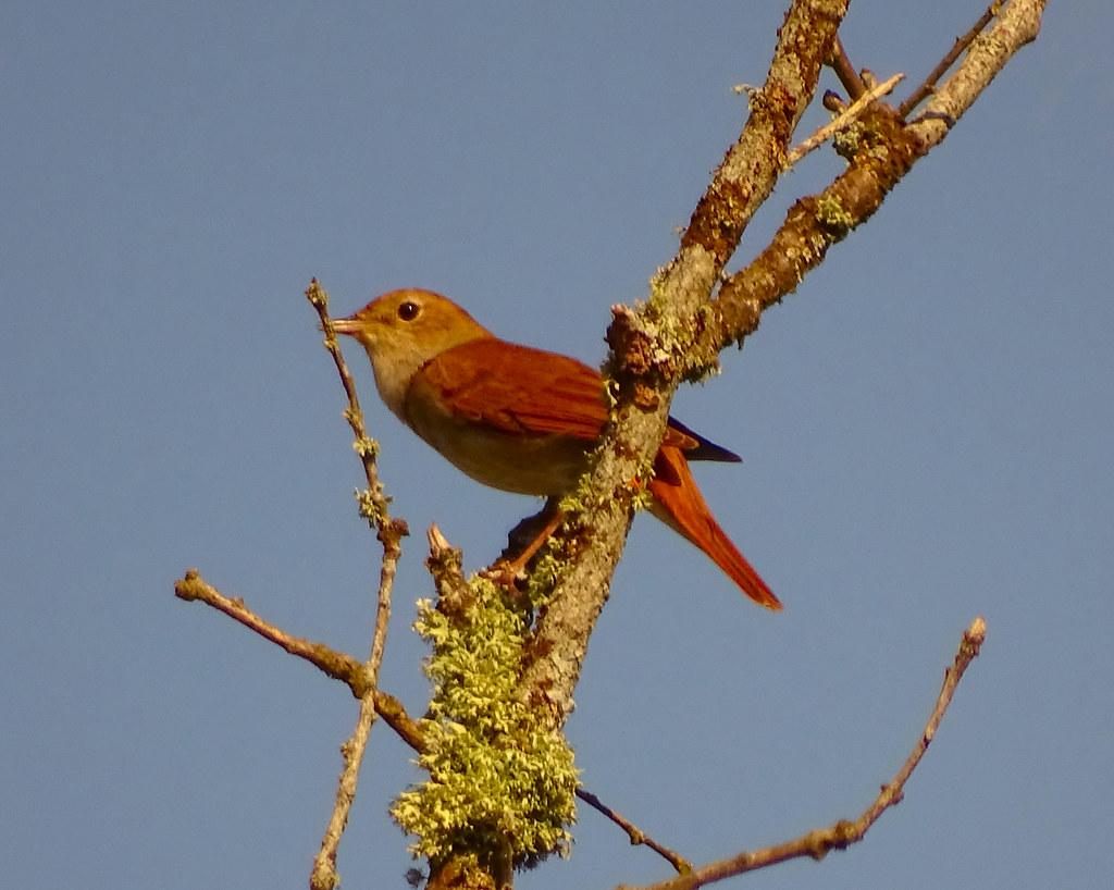 Águas Frias (Chaves) - ... ave atenta ao horizonte ...