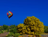 Roy G. Biv Lives in Arizona (oybay©) Tags: arizona balloon hotairballoon color colors colorful roygbiv spring2019 spring paloverde tree blossoms yellowflowers enmasse bluesky clouds cloudy albaluminis