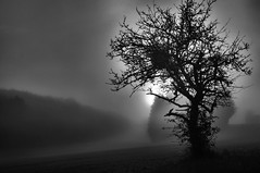 Foggy morning9 (Franck gallery) Tags: nature naturallight lumièrenaturelle tree fog brouillard sun soleil levédesoleil sunrise morning matin landscape paysage shape forme contraste contrast ireal irréel magic magique d90 blackwhite noirblanc unreal